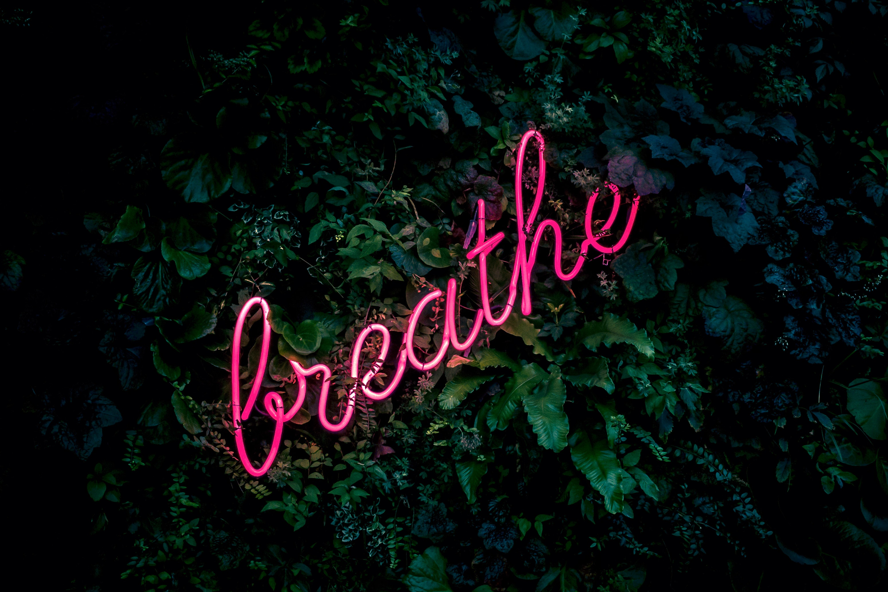 Dark neon pink lights spell out the word 'breathe' in cursive with a jungle background