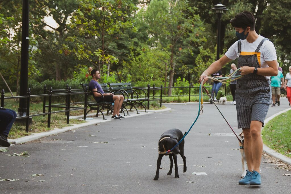 Man walking dogs small